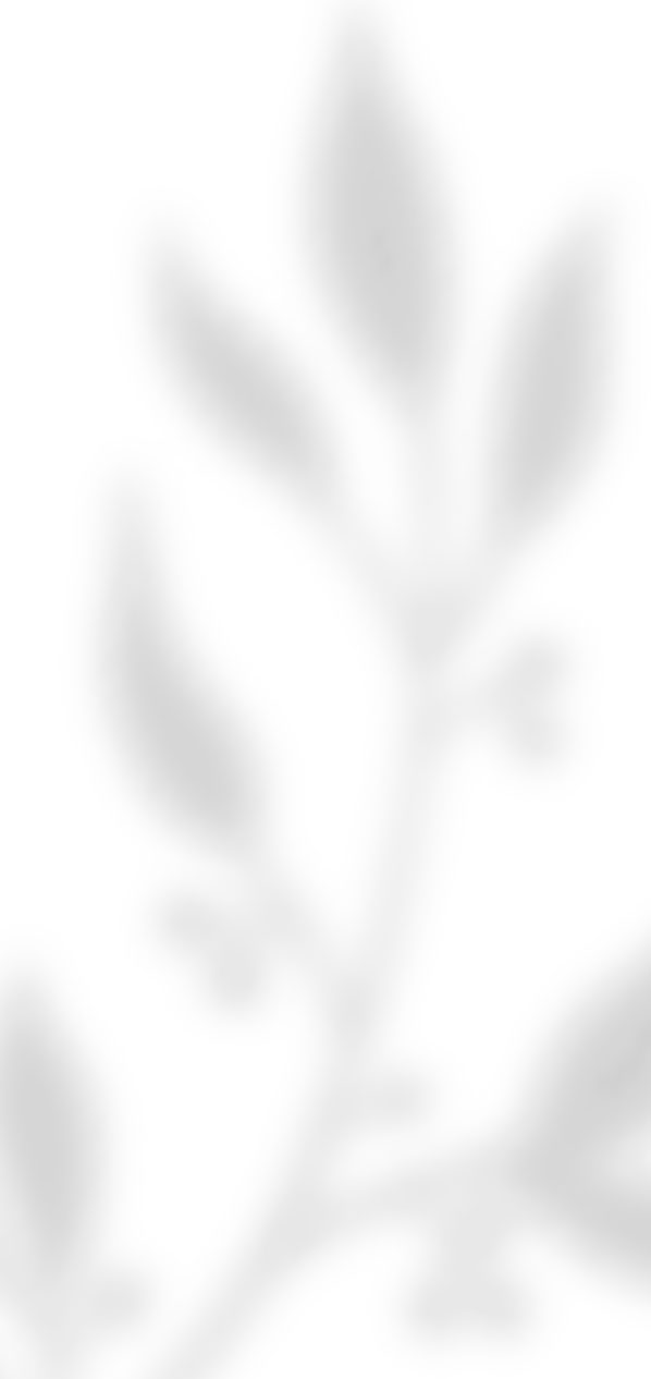 about-banner2